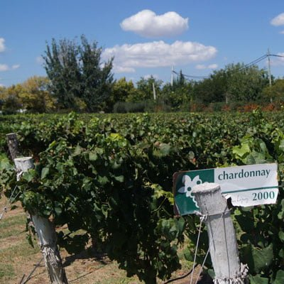 Wines from Mendoza